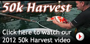 Click here to watch our 2012 50k Harvest video
